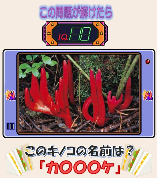 【第12回】モモワのパズルアイランド 問題1.png