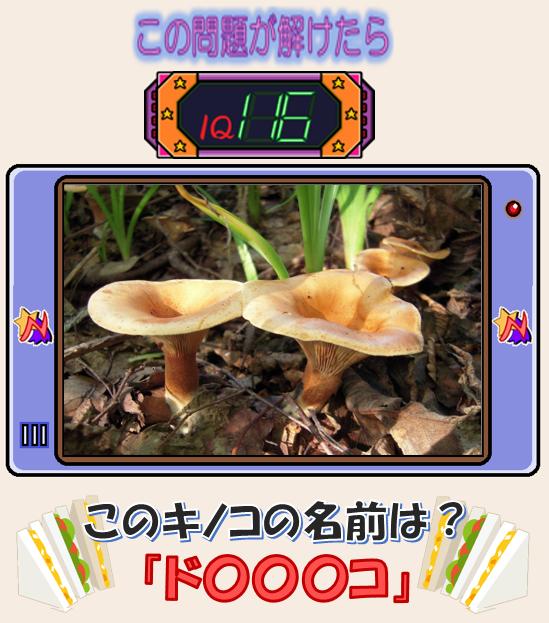 【第12回】モモワのパズルアイランド 問題4.png